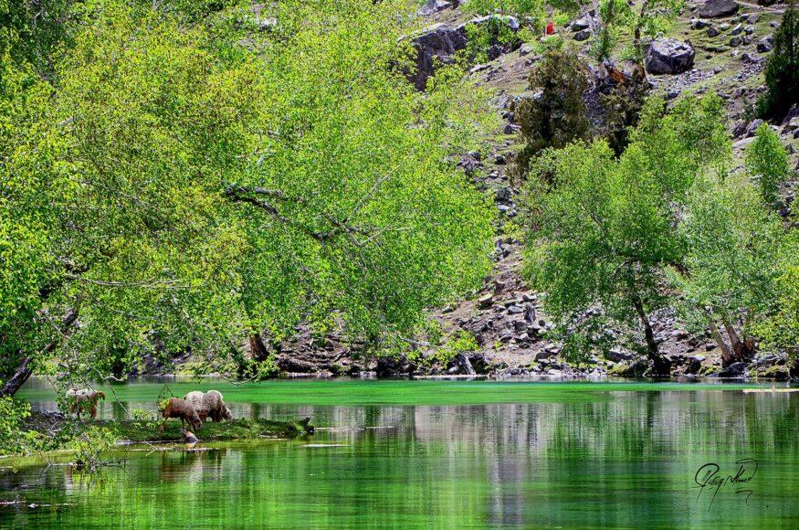 Naltar Lake Hunza Valley