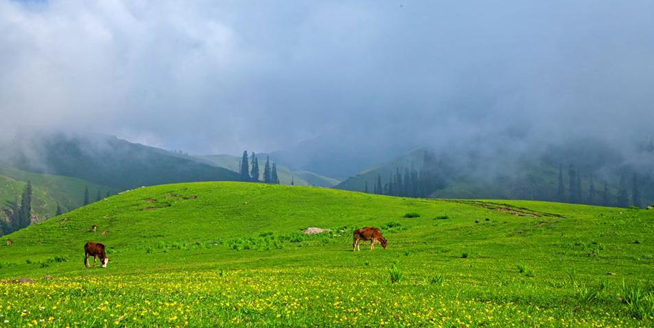 Shogran Valley Tour Plans